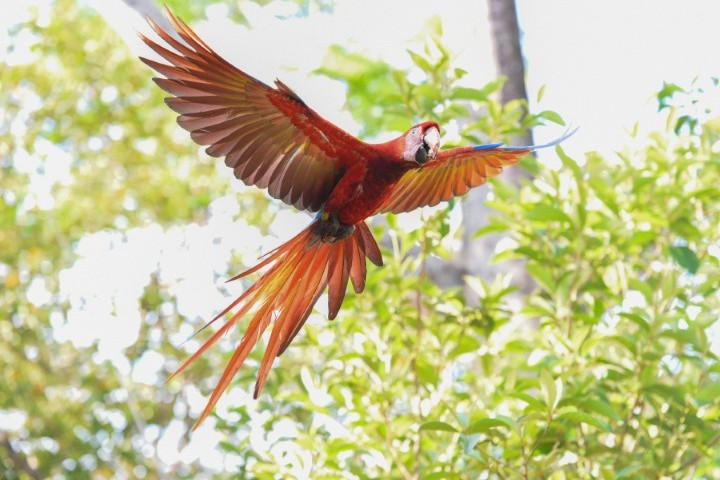 macaw recovery network 01