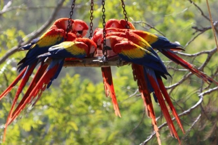 macaw recovery network 02