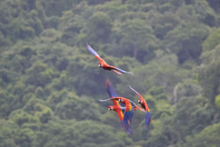 macaw recovery network 03