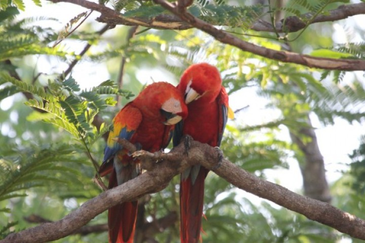 macaw recovery network 04