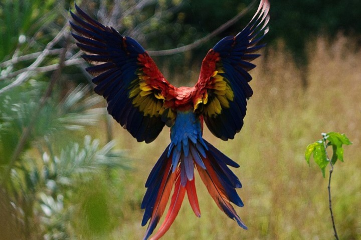 macaw recovery network 05