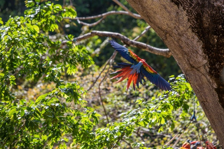 macaw recovery network 07