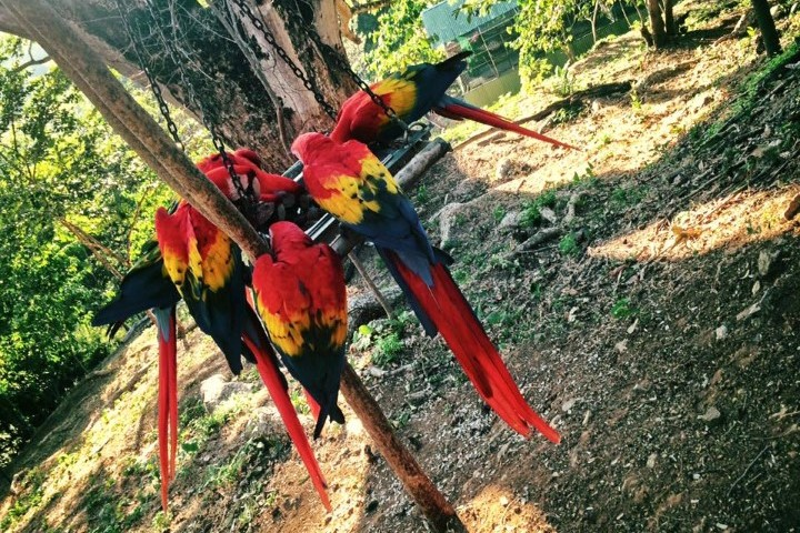 macaw recovery network 10